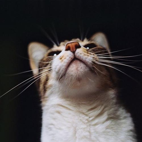 Phương Bé's avatar