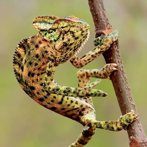 Ex Chameleon's avatar
