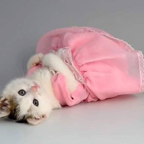 Princess Dora(Singer)✪'s avatar