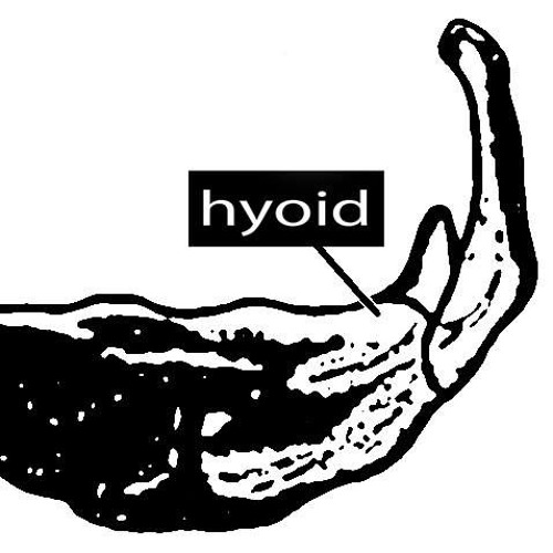 HYOID contemporary voices's avatar