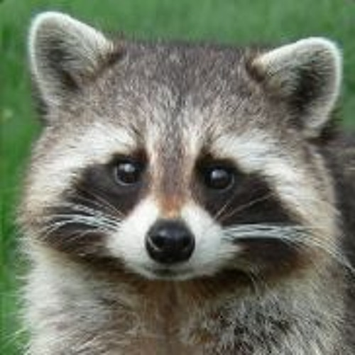 Overco's avatar