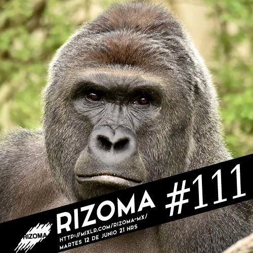 Rizoma MX's avatar