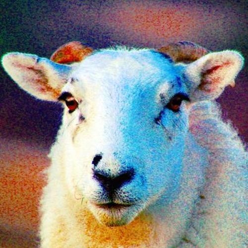 RAMupgrade's avatar