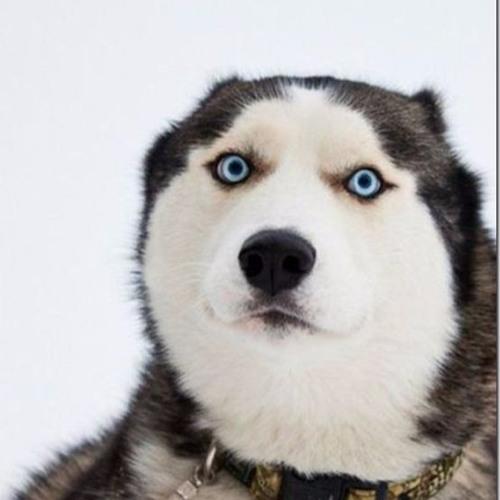 Derpy Husky's avatar