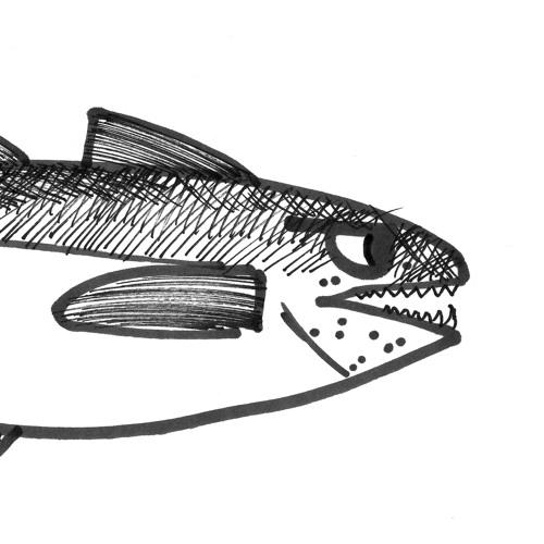 Alaska Seelachs Quartett's avatar