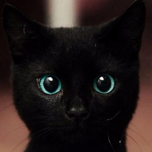 Cat Control's avatar