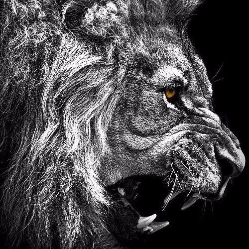 LionzDen Productionz's avatar
