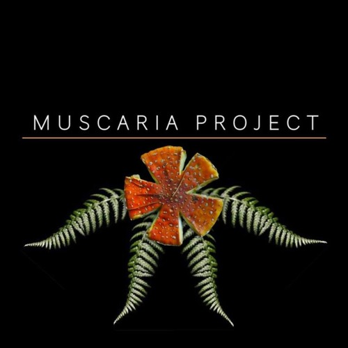 MUSCARIA PROJECT's avatar