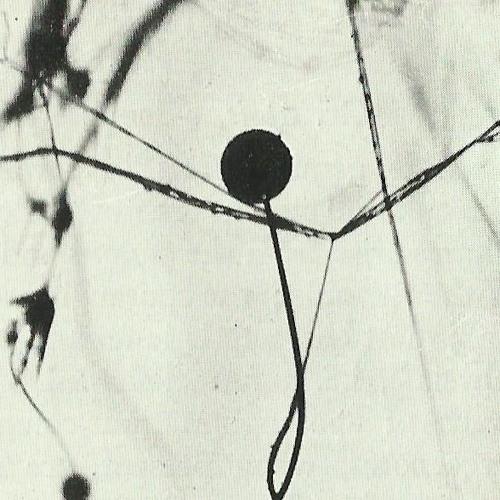 Fields of Grief's avatar