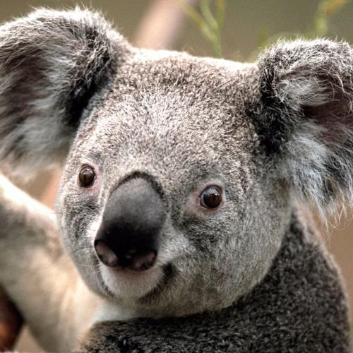 Armin Tufe's avatar