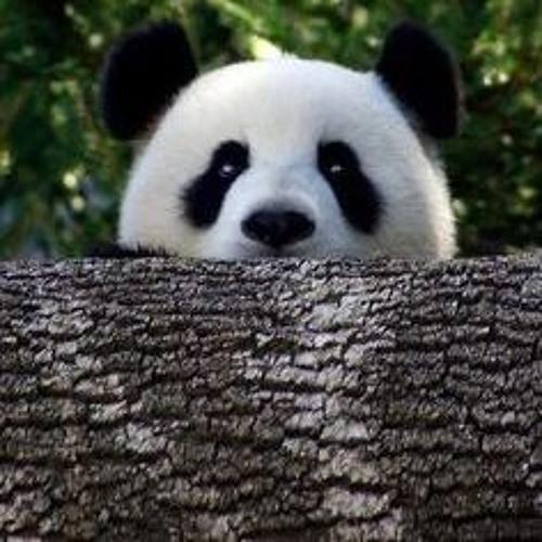 Perplexed Panda's avatar