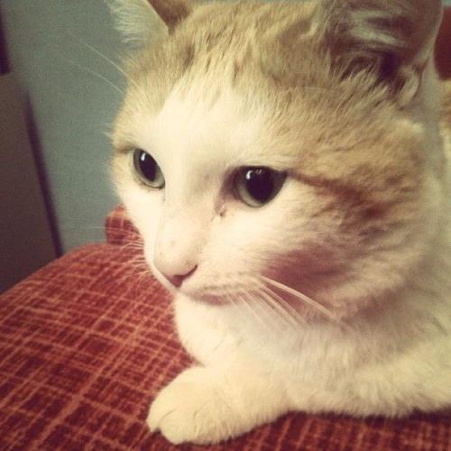 CatDany's avatar