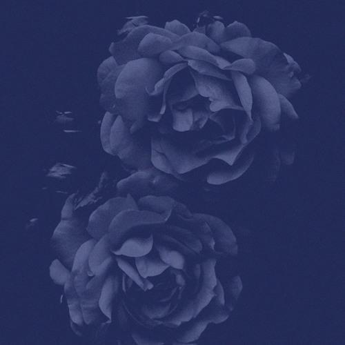 dmara's avatar