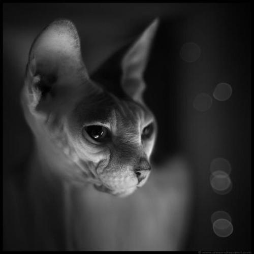 vek|bashilO's avatar