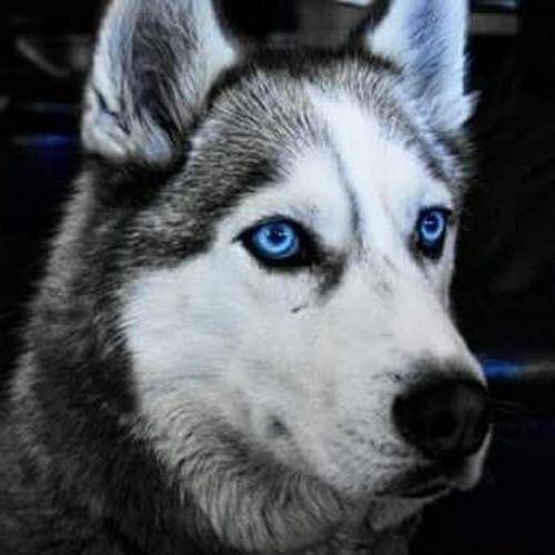 Vain Mona EDM's avatar