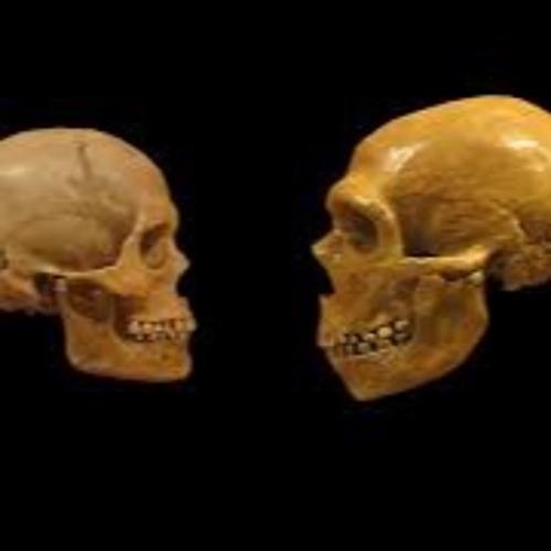 Skull vs Skull's avatar
