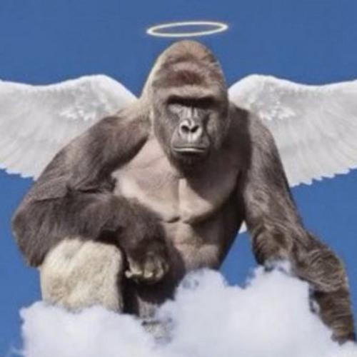 Pizzo's avatar
