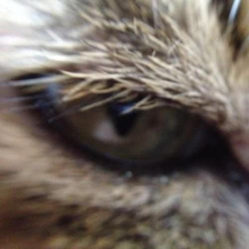 Kise/ahedface's avatar