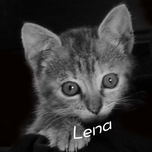 Lena's avatar