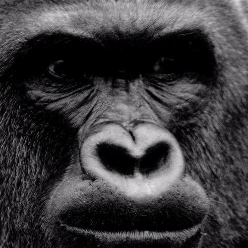 Harambe's avatar