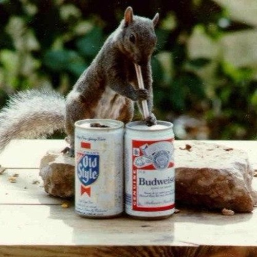 Party Squirrel's avatar