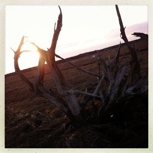 Rabidgravy-revolution (vik44 remix)