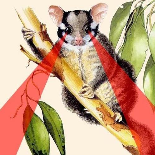Marco Possum's avatar