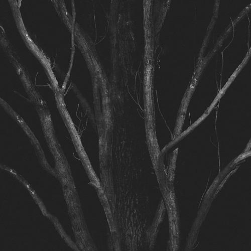 memoran's avatar