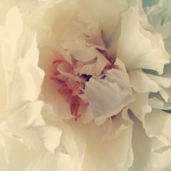 forever_spring