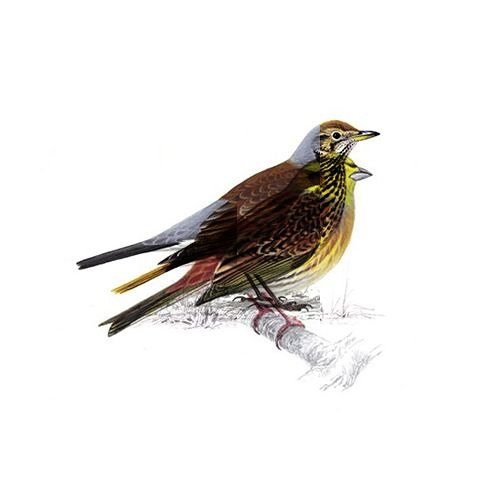 HybridTreeBird's avatar