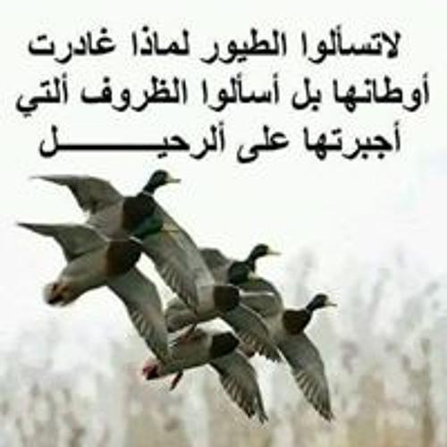 Ahmad saufi forex