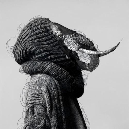 Alphant's avatar