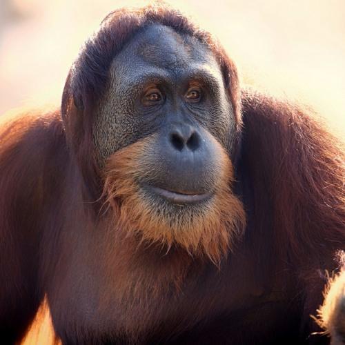 Monkey's avatar