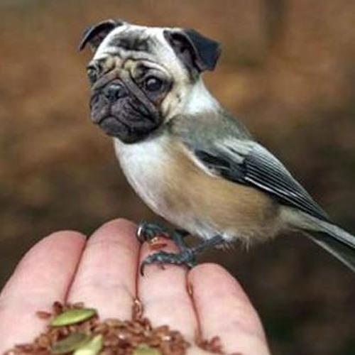 Bird Dawgs's avatar