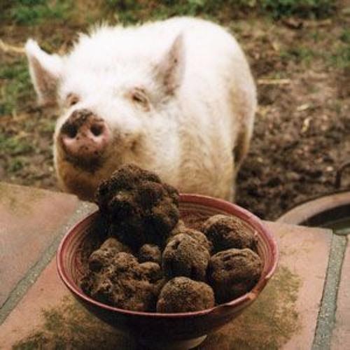 Truffle Pig's avatar