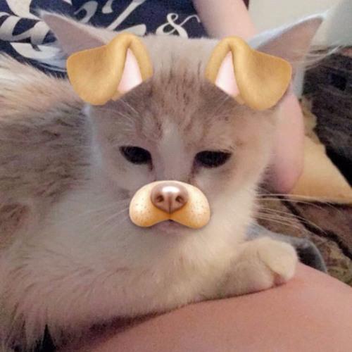 peej's avatar