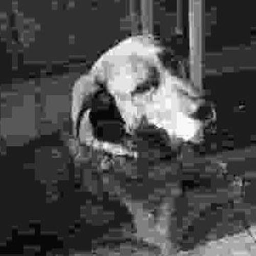 atum!'s avatar