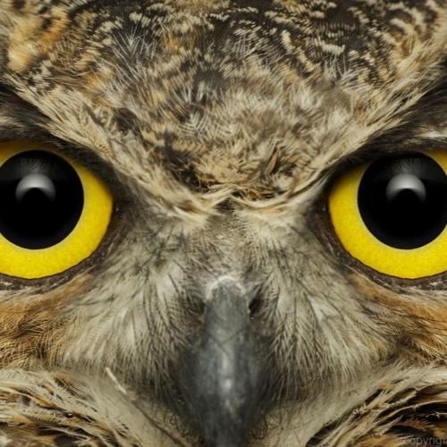 StereoPhysics's avatar