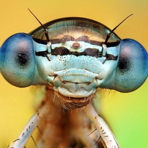 Los Insectos's avatar