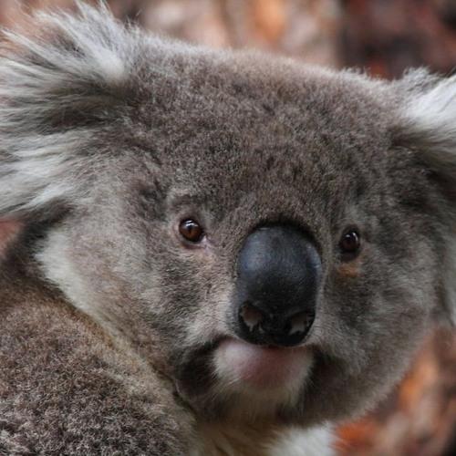 Makintoch's avatar