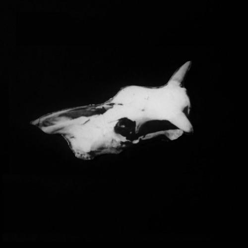 Foundling Studios's avatar
