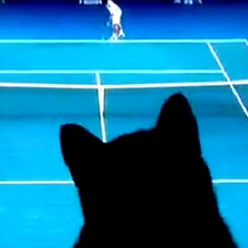 TennisCat's avatar