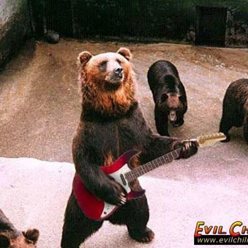Rock the Bear's avatar