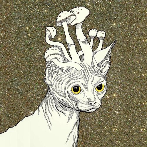 Austin Wright's avatar