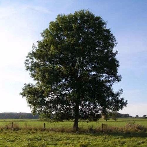 A Tree.'s avatar
