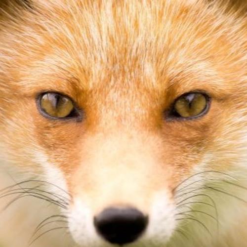 PookaFox's avatar