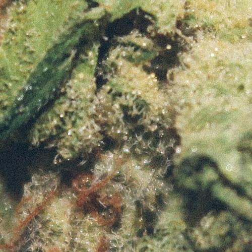 lil weed jar's avatar