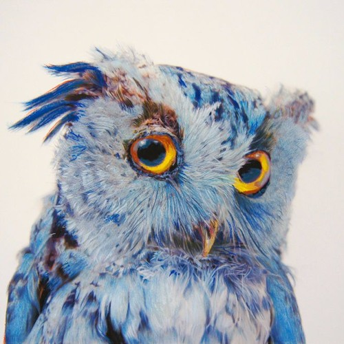 dream.owl's avatar