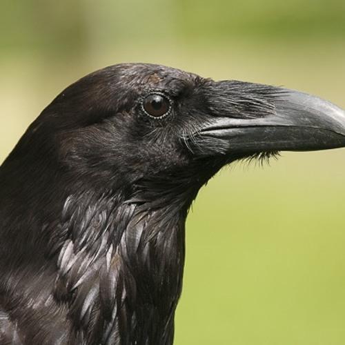 De Zwarte Raaf's avatar