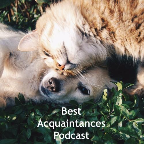 Best Acquaintances's avatar